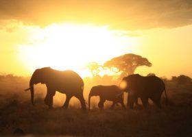 Государственные природные заповедники мира